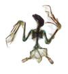 http://mczbase.mcz.harvard.edu/specimen_images/mammalogy/large/28125_Nycteris_aethiopica_luteola_v.jpg