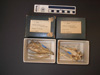 http://mczbase.mcz.harvard.edu/specimen_images/mammalogy/large/2835_Dasypus_novemcinctus_fenestratus_hl.jpg