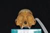 http://mczbase.mcz.harvard.edu/specimen_images/mammalogy/large/29544_Alouatta_palliata_trabeata_hf.jpg