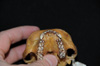 http://mczbase.mcz.harvard.edu/specimen_images/mammalogy/large/29544_Alouatta_palliata_trabeata_hv2.jpg