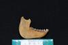 http://mczbase.mcz.harvard.edu/specimen_images/mammalogy/large/29544_Alouatta_palliata_trabeata_ml.jpg