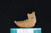 http://mczbase.mcz.harvard.edu/specimen_images/mammalogy/large/29544_Alouatta_palliata_trabeata_ml2.jpg