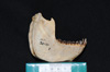 http://mczbase.mcz.harvard.edu/specimen_images/mammalogy/large/30431_Alouatta_belzebul_ml2.jpg