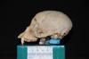 http://mczbase.mcz.harvard.edu/specimen_images/mammalogy/large/30711_Ateles_Paniscus_hl.jpg