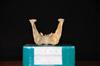 http://mczbase.mcz.harvard.edu/specimen_images/mammalogy/large/30712_Ateles_Paniscus_jp.jpg