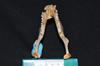 http://mczbase.mcz.harvard.edu/specimen_images/mammalogy/large/30715_Alouatta_belzebul_md.jpg