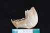 http://mczbase.mcz.harvard.edu/specimen_images/mammalogy/large/30715_Alouatta_belzebul_ml2.jpg