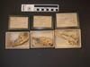 http://mczbase.mcz.harvard.edu/specimen_images/mammalogy/large/30945_Dasypus_novemcinctus_novemcinctus_hv.jpg