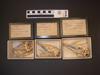 http://mczbase.mcz.harvard.edu/specimen_images/mammalogy/large/30946_Dasypus_novemcinctus_novemcinctus_hv2.jpg
