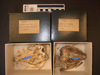 http://mczbase.mcz.harvard.edu/specimen_images/mammalogy/large/30950_Euphractus_sexcinctus_hv.jpg
