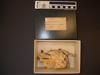 http://mczbase.mcz.harvard.edu/specimen_images/mammalogy/large/31083_Choloepus_didactylus_hv.jpg