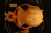 http://mczbase.mcz.harvard.edu/specimen_images/mammalogy/large/31105_Colobus_polykomos_matschiei_hd.jpg