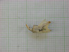 http://mczbase.mcz.harvard.edu/specimen_images/mammalogy/large/31270_Otomys_tropicalis_elgonis_hl2.jpg