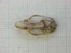 http://mczbase.mcz.harvard.edu/specimen_images/mammalogy/large/31271_Otomys_tropicalis_elgonis_hd.jpg