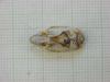 http://mczbase.mcz.harvard.edu/specimen_images/mammalogy/large/31272_Otomys_tropicalis_elgonis_hd.jpg