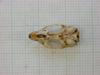 http://mczbase.mcz.harvard.edu/specimen_images/mammalogy/large/31272_Otomys_tropicalis_elgonis_hv.jpg
