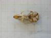 http://mczbase.mcz.harvard.edu/specimen_images/mammalogy/large/31366_Otomys_angoniensis_elassodon_hv.jpg