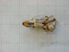 http://mczbase.mcz.harvard.edu/specimen_images/mammalogy/large/31368_Otomys_typus_jacksoni_hv.jpg