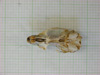 http://mczbase.mcz.harvard.edu/specimen_images/mammalogy/large/31427_Otomys_tropicalis_elgonis_hv.jpg