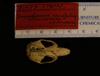 http://mczbase.mcz.harvard.edu/specimen_images/mammalogy/large/31475_Saccostomus_mearnsi_hd.jpg