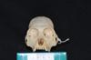 http://mczbase.mcz.harvard.edu/specimen_images/mammalogy/large/31697_Alouatta_belzebul_hf.jpg