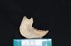 http://mczbase.mcz.harvard.edu/specimen_images/mammalogy/large/31697_Alouatta_belzebul_ml.jpg