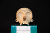 http://mczbase.mcz.harvard.edu/specimen_images/mammalogy/large/31706_Ateles_Paniscus_hf.jpg