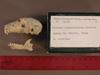 http://mczbase.mcz.harvard.edu/specimen_images/mammalogy/large/31722_Otolemur_crassicaudatus_lasiotis_hl.jpg