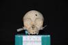 http://mczbase.mcz.harvard.edu/specimen_images/mammalogy/large/31759_Ateles_Paniscus_hf.jpg
