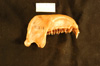 http://mczbase.mcz.harvard.edu/specimen_images/mammalogy/large/31938_colobus_badius_rufomitratus_ml.jpg