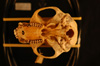 http://mczbase.mcz.harvard.edu/specimen_images/mammalogy/large/31941_Colobus_badius_rufomitratus_hv.jpg
