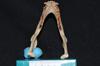 http://mczbase.mcz.harvard.edu/specimen_images/mammalogy/large/32151_Alouatta_belzebul_md.jpg