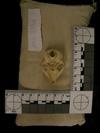 http://mczbase.mcz.harvard.edu/specimen_images/mammalogy/large/33908_Galago_senegalensis_moholi_hv.jpg
