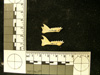 http://mczbase.mcz.harvard.edu/specimen_images/mammalogy/large/33908_Galago_senegalensis_moholi_ml2.jpg