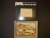 http://mczbase.mcz.harvard.edu/specimen_images/mammalogy/large/34489_Choloepus_didactylus_hv.jpg