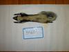 http://mczbase.mcz.harvard.edu/specimen_images/mammalogy/large/34601_Mephitis_mephitis_elongata_d.jpg
