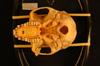 http://mczbase.mcz.harvard.edu/specimen_images/mammalogy/large/34793_Presbytis_entellus_thersites_hv.jpg