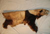 http://mczbase.mcz.harvard.edu/specimen_images/mammalogy/large/34861_Ailuropoda_melanoleuca_l.jpg