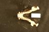 http://mczbase.mcz.harvard.edu/specimen_images/mammalogy/large/35616_Presbytis_rubicunda_md.jpg