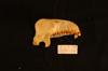 http://mczbase.mcz.harvard.edu/specimen_images/mammalogy/large/35638_Presbytis_rubicunda_ml.jpg