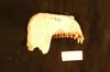 http://mczbase.mcz.harvard.edu/specimen_images/mammalogy/large/35671_Presbytis_cristata_ultima_ml.jpg