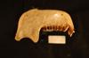 http://mczbase.mcz.harvard.edu/specimen_images/mammalogy/large/37327_Nasalis_larvatus_ml.jpg