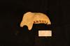 http://mczbase.mcz.harvard.edu/specimen_images/mammalogy/large/37370_Presbytis_hosei_ml.jpg