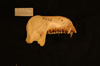 http://mczbase.mcz.harvard.edu/specimen_images/mammalogy/large/37716_Presbytis_phayrei_crepuscula_ml.jpg