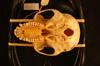 http://mczbase.mcz.harvard.edu/specimen_images/mammalogy/large/37933_colobus_badius_langi_hv.jpg