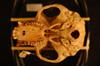 http://mczbase.mcz.harvard.edu/specimen_images/mammalogy/large/37943_Colobus_badius_nigrimanus_hv.jpg
