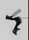 http://mczbase.mcz.harvard.edu/specimen_images/mammalogy/large/38019_Pan_paniscus_mandx.jpg