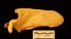 http://mczbase.mcz.harvard.edu/specimen_images/mammalogy/large/38019_Pan_paniscus_scap-ant.jpg