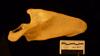 http://mczbase.mcz.harvard.edu/specimen_images/mammalogy/large/38020_Pan_paniscus_scap-pos.jpg
