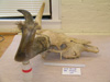 http://mczbase.mcz.harvard.edu/specimen_images/mammalogy/large/38108_Novibos_sauveli_hl2.jpg
